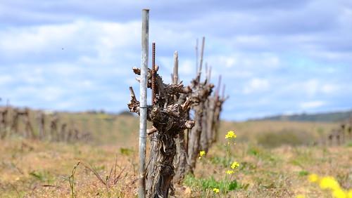 Untitled vinho