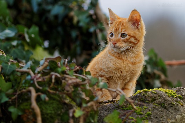 Kitten too cute - Chaton trop mignon