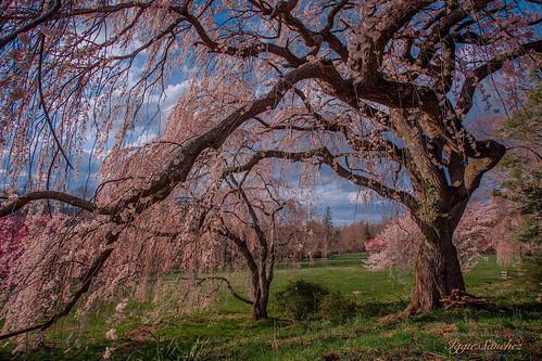 sky clouds landscape newjersey spring colorful skylans