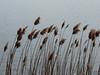 Hořejší padrťský rybník, foto: Petr Nejedlý