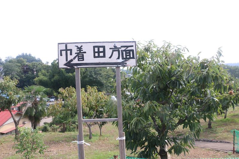 2014-09-23_00060_巾着田.jpg
