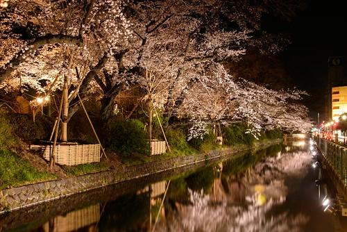japan 桜 日本 sakura gunma takasaki 群馬県 高崎市 高崎城址公園