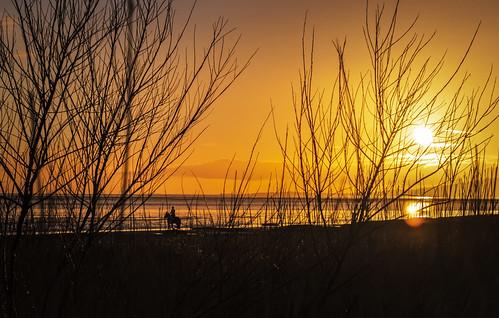 sunset horse powfoot