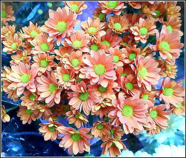 Santini Flowers ..