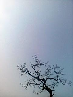 Cracked sky