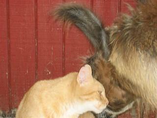 cat_llama