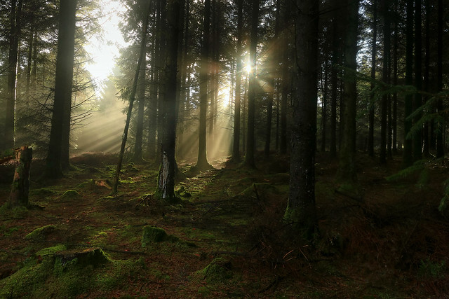 Forest Rays, Exmoor, Somerset, UK