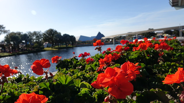 Epcot Flower and Garden Festival 2016 (357)