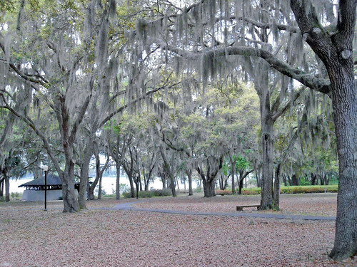 trees landscape scenery florida liveoak spanishmoss ladylake