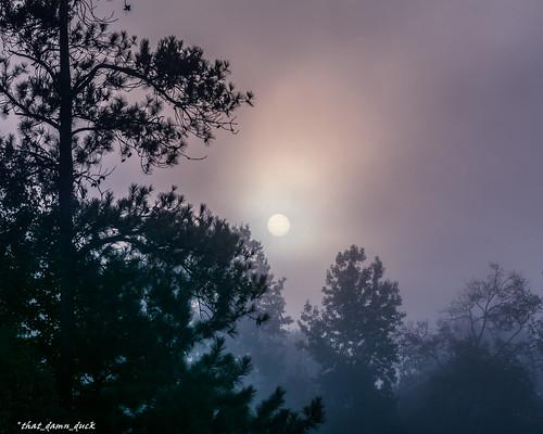 trees sun nature fog sunrise dawn foggy southcarolina