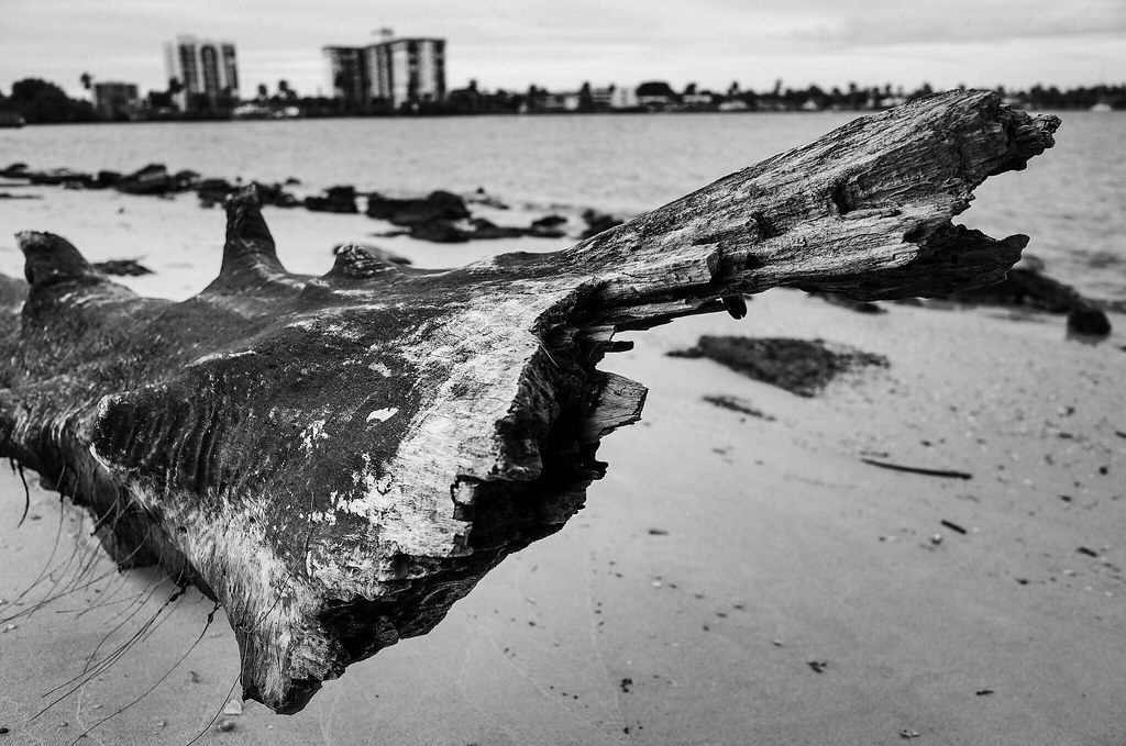 Palm Beach Driftwood.