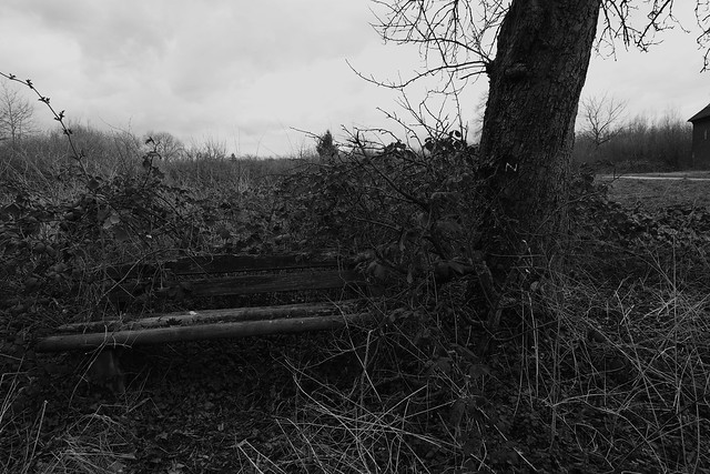 N with lonely bench