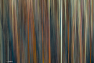 Abstract caused by intentional blur of vegetation in Leslie Street Spit | by Phil Marion (173 million views - THANKS)