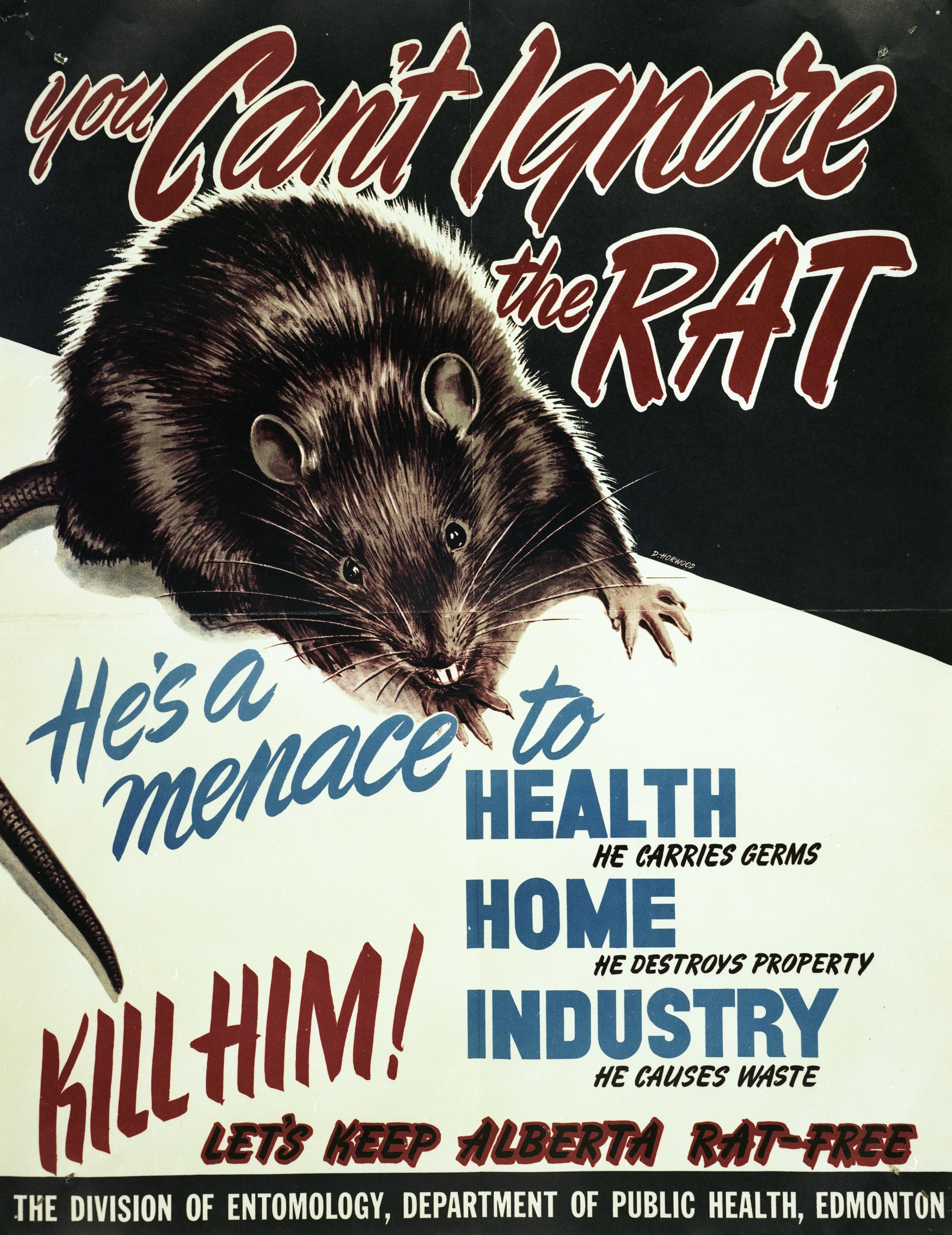 Alberta Department of Public Health Rat Poster