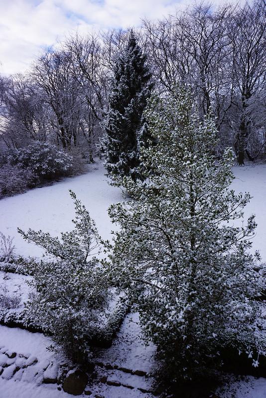 Vinterhave-midtjanuar-2016 (1)