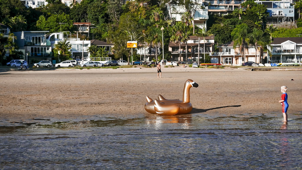 62+193: Mum, there's  giant swan on the beach!