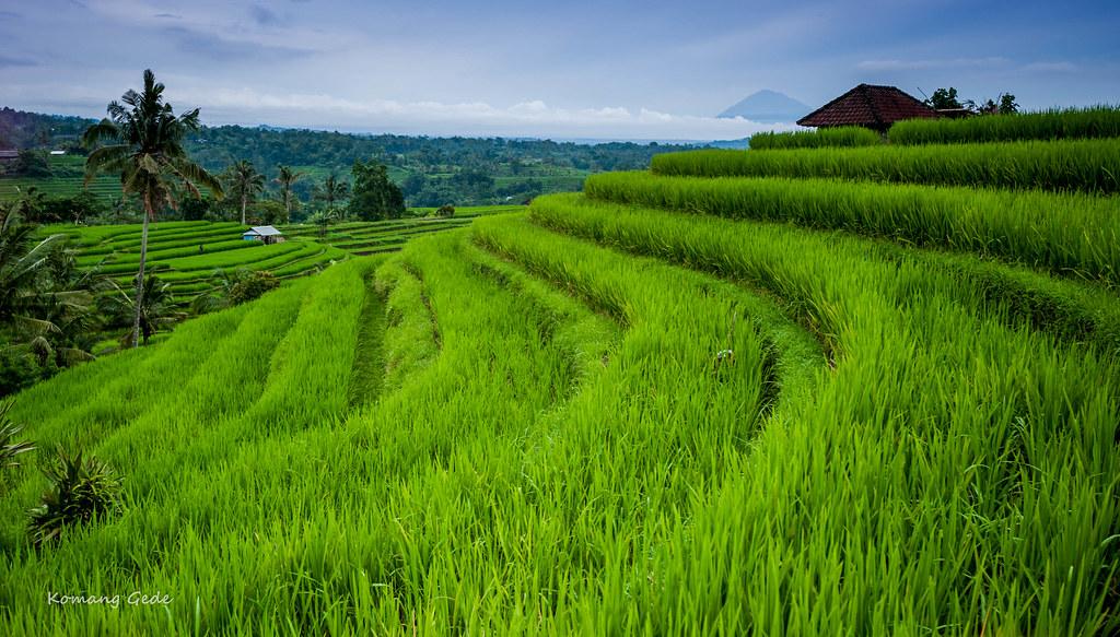 Jatiluwih Rice Terraces Bali Indonesia Jatiluwih Rice T Flickr