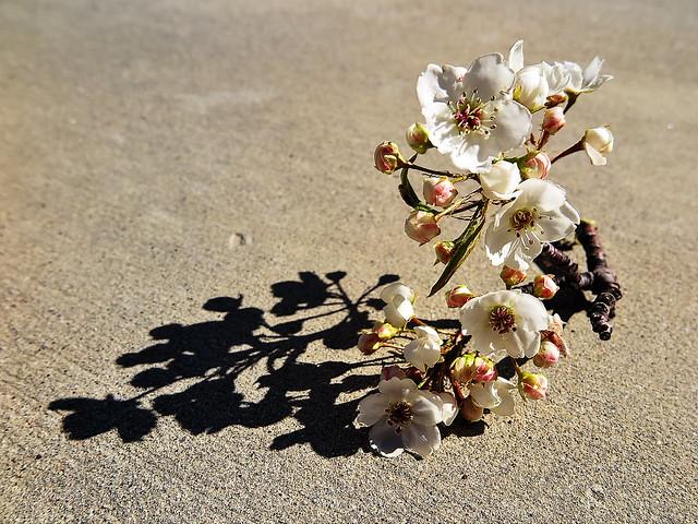 1 Awakens 2 Bloom