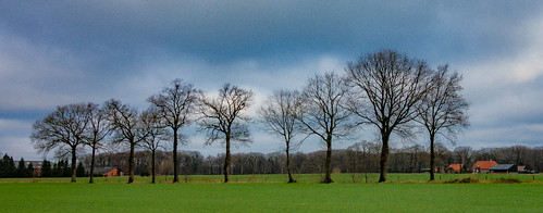 trees netherlands landscape outdoor processing farms trekvogelpad hikingtrail greengrass grassfield law2 htmt nederlandvandaag treemendoustreetuesday