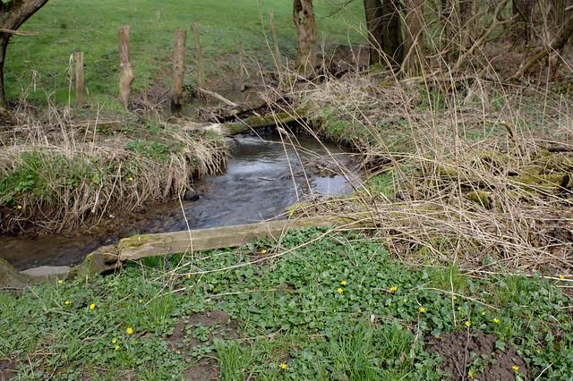 The little creek