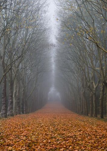 autumn mist france leaves fog forest 50mm nikon îledefrance parc sceaux d5100 davitkhutsishvili dkhphoto