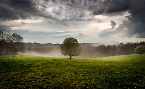mist tree canon landscape t5i davidsharo