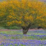 Texas Wildflowers Workshop_2015_Trees