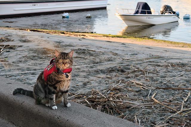 Life Jacket Cat #1