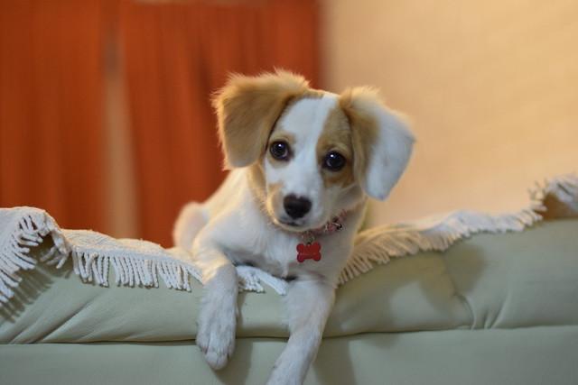 Pepa the dog