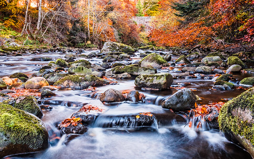 autumn leaves river scotland unitedkingdom moray divie randolphsleap