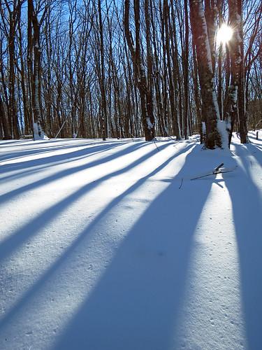 snow landscape northcarolina westernnorthcarolina southernappalachians elkknobstatepark canonpowershotsx40hs beechtreetrail