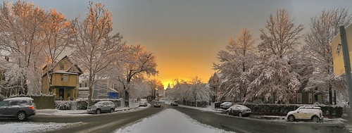 street trees winter panorama snow ice boston golden frozen massachusetts newengland neighborhood somerville pw winterstormlexi