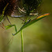 Print: Other Insects & Like Critters
