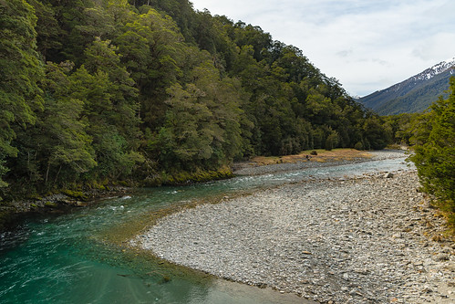 newzealand sunlight forest river moss bush rocks shade nz southisland upstream riverbend mtaspiringnationalpark bluepools beechforest makarorariver haastrd