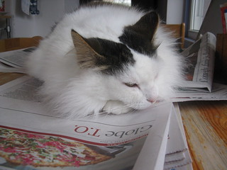 Fluffy cat reads the Globe and Mail newspaper | by Helena Jacoba