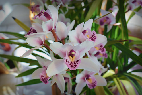 Orchid (27/03/2016)