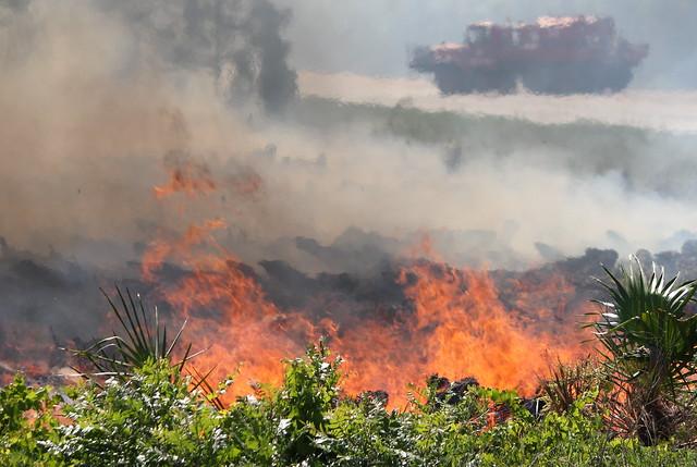 Brush fire in Melbourne Florida