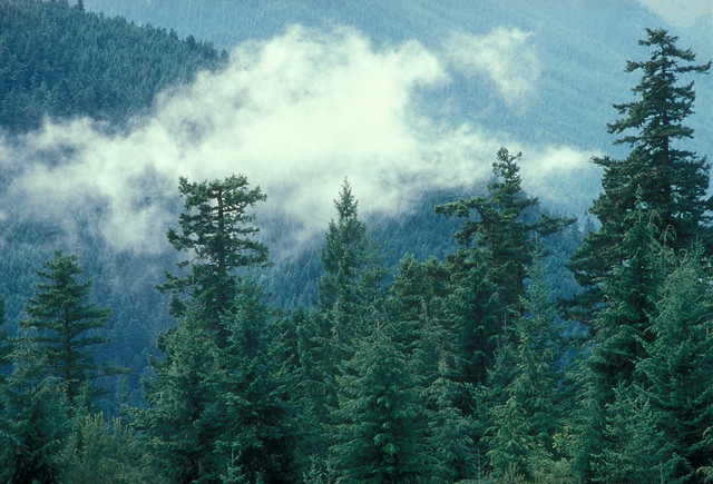 CLOUDS FORMING OVER BUCKHORN WILDERNESS, Olympic National Forest