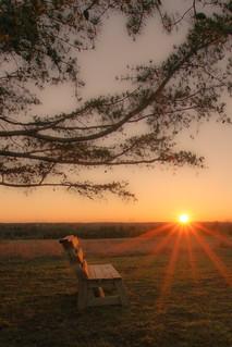 Sunset Bench - 3