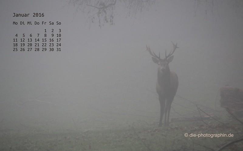 hirsch_januar_kalender_die-photographin