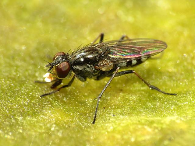 Fly on Algae
