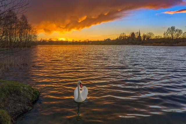 swimming in golden sunset light
