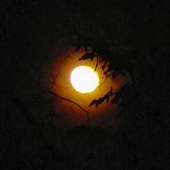 Moon through the trees over Bearskin Lodge tonight.