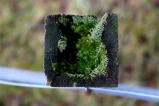 Fencepost garden 03