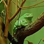 Green beauty :)