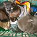 Sloan Cats