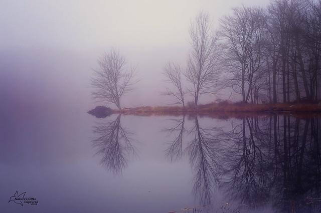 Still Reflections