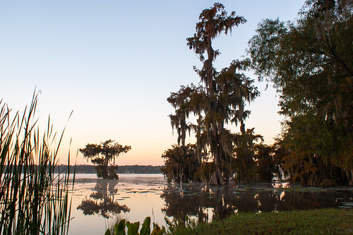 trees usa lake sunrise reeds louisiana atchafalayabasin delta swamp spanishmoss wetlands cypress lakemartin