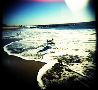 beach birds 2 | by OuroborosX