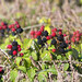 Brambles - Photo (c) Sergey Yeliseev, some rights reserved (CC BY-NC-ND)